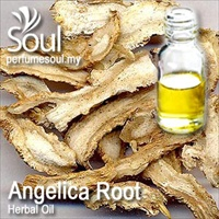 Herbal Oil Angelica Root - 50ml