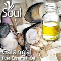 高良姜精油 - 10毫升 Galanga Essential Oil