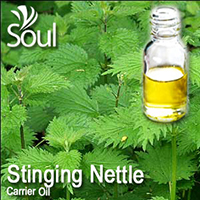 Carrier Oil Stinging Nettle - 100ml